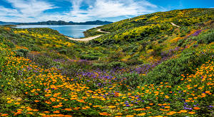 Image USA Mountains Landscape photography California wildflowers Nature