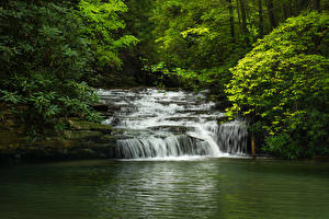 Picture USA Parks Waterfalls Branches Blackwater Falls State Park Virginia Nature