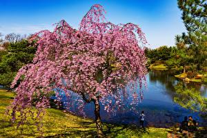 Images USA Spring Flowering trees River Missouri
