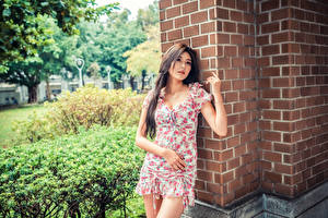 Fotos Asiatische Kleid Bokeh Mädchens