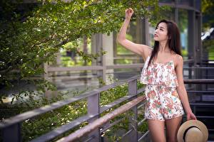 Wallpaper Asian Fence Branches Brunette girl Hands Hat young woman