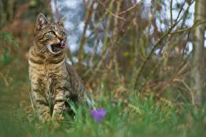 Bilder Hauskatze Unscharfer Hintergrund Sitzen Blick Tiere