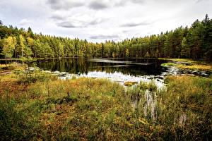 Fotos Finnland Helsinki Park Wälder Herbst See Gras Sipoonkorpi National Park Natur