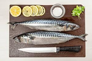 Fotos & Bilder Fische - Lebensmittel Messer Zitrone Zwei Salz Schneidebrett Lebensmittel