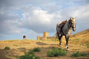 Bilder Festung Pferde Bokeh ein Tier