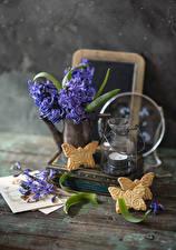 Fotos & Bilder Hyazinthen Kekse Kerzen Violett Blumen Lebensmittel