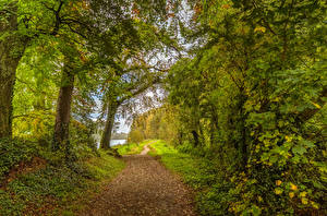 Fondos de escritorio Irlanda Bosque árboles Senda Boyne Valley