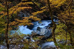 Fondos de escritorio Japón Bosques Ríos Piedra árboles