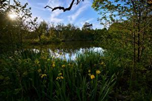 Picture Netherlands River Irises Rays of light Graveland Nature