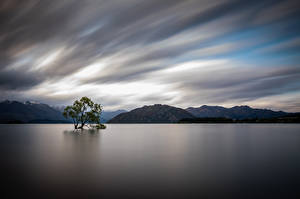 Picture New Zealand Lake Mountain Trees Lake Wanaka Nature