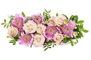 Bakgrundsbilder på skrivbordet Rosor Krysantemum Vit bakgrund blomma