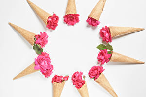 Hintergrundbilder Rosen Weißer hintergrund Eistüte Rosa Farbe Vorlage Grußkarte Blüte