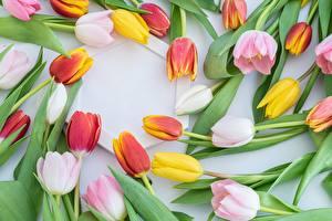 Картинка Тюльпан Много Розовые Желтая цветок