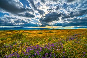Bureaubladachtergronden Verenigde staten Grasland Landschap van Hemelgewelf Californië Wolken Carrizo Plain National Monument Natuur