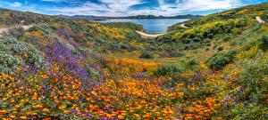 Desktop hintergrundbilder USA See Panorama Kalifornien Diamond Valley Lake, wildflowers Natur