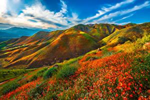 Bakgrunnsbilder USA Fjell Vår Landskap California Skyer Walker Canyon, wildflowers Natur
