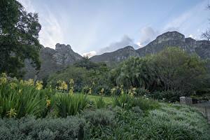 Fotos & Bilder USA Park Gebirge Strauch Prehistoric Garden Oregon Natur
