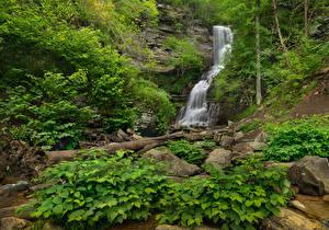 Fonds d'écran USA Parc Chute d'eau Pierres Falaise Arbrisseau Blackwater Falls State Park Virginia