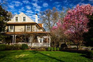 Bilder Vereinigte Staaten Frühling Blühende Bäume Herrenhaus Design Rasen Missouri Städte