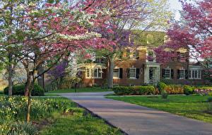 Fonds d'écran USA Printemps Maison La floraison des arbres Gazon Arbrisseau Berea College President's House Kentucky Villes Nature