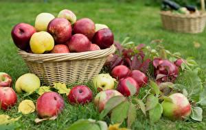 Fotos & Bilder Äpfel Viel Weidenkorb Gras Blattwerk Natur