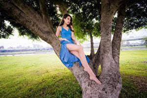 Bureaubladachtergronden Aziaten Jurk Benen Bomen jonge vrouw
