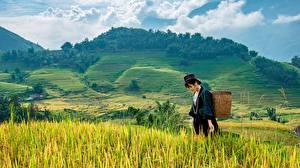 Fonds d'écran Asiatiques Champ Colline Panier en osier Filles