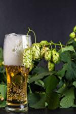 Bilder Bier Echter Hopfen Weinglas Schaum Lebensmittel