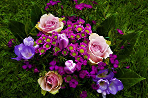 Fondos de escritorio Ramos Rosa Crocus Tulipas flor