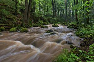 Bakgrunnsbilder Tyskland Skoger Elver Elv Stein Trær Bladmoser Rheinland-Pfalz Natur