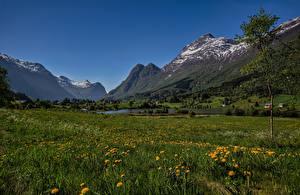 Fotos Norwegen Gebirge Landschaftsfotografie Grünland Olden