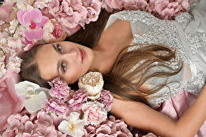 Desktop hintergrundbilder Orchidee Nelken Braunhaarige Blick junge Frauen