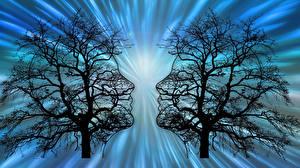 Hintergrundbilder Menschen Bäume Silhouetten