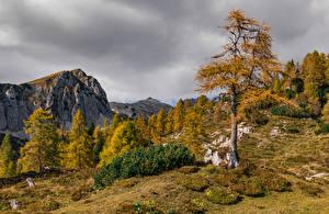 Picture Slovenia Autumn Mountains Trees