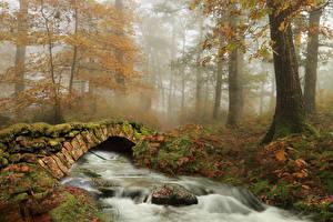 Wallpaper Spain Forest Autumn Rivers Bridges Stones Trees Fog Moss Ziga Nature
