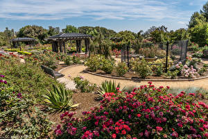 Fonds d'écran USA Jardins Roses Californie Arbrisseau Rose Garden at South Coast Botanic Garden Nature