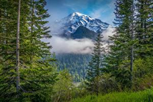 Hintergrundbilder Vereinigte Staaten Gebirge Parks Wälder Bäume Wolke Washington Mount Rainier National Park