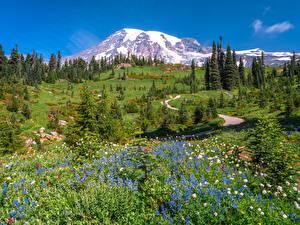 Hintergrundbilder Vereinigte Staaten Berg Parks Landschaftsfotografie Bäume Washington Mount Rainier National Park