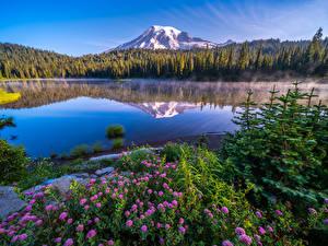 Pictures USA Parks Mountains Lake Scenery Washington Trees Mount Rainier National Park Nature