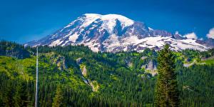 Bilder USA Park Gebirge Landschaftsfotografie Washington Bäume Mount Rainier National Park