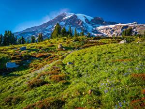 Bilder USA Parks Gebirge Landschaftsfotografie Stein Washington Mount Rainier National Park
