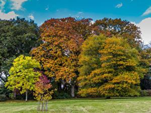 Pictures United Kingdom Autumn Trees Stourton, Wiltshire