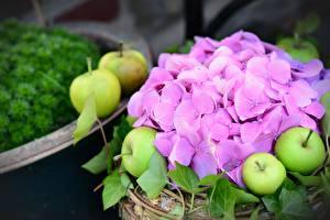 Fotos & Bilder Äpfel Hortensien Bokeh Rosa Farbe Blumen