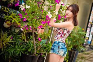 Hintergrundbilder Asiaten Braunhaarige Starren Shorts Mädchens