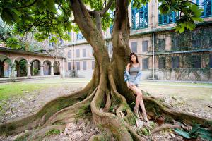 Bureaubladachtergronden Aziaten Pose Bomen Benen Kijkt jonge vrouw