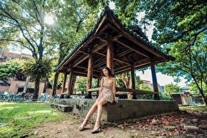 Fotos Asiaten Sitzt Kleid Bein Starren junge Frauen