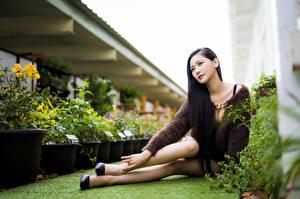 Bilder Asiatisches Sitzt Posiert Bein Unscharfer Hintergrund Mädchens