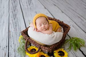 Bakgrunnsbilder Asiater Solsikker Baby Kurver Sover
