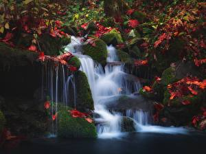 Picture Autumn Waterfalls Stones Moss Leaf