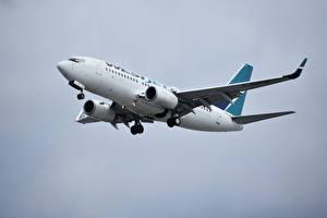 Bakgrundsbilder på skrivbordet Boeing Flygplan Passagerarplan 737, WestJet